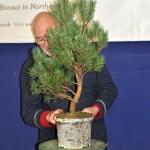 Pine repot demo