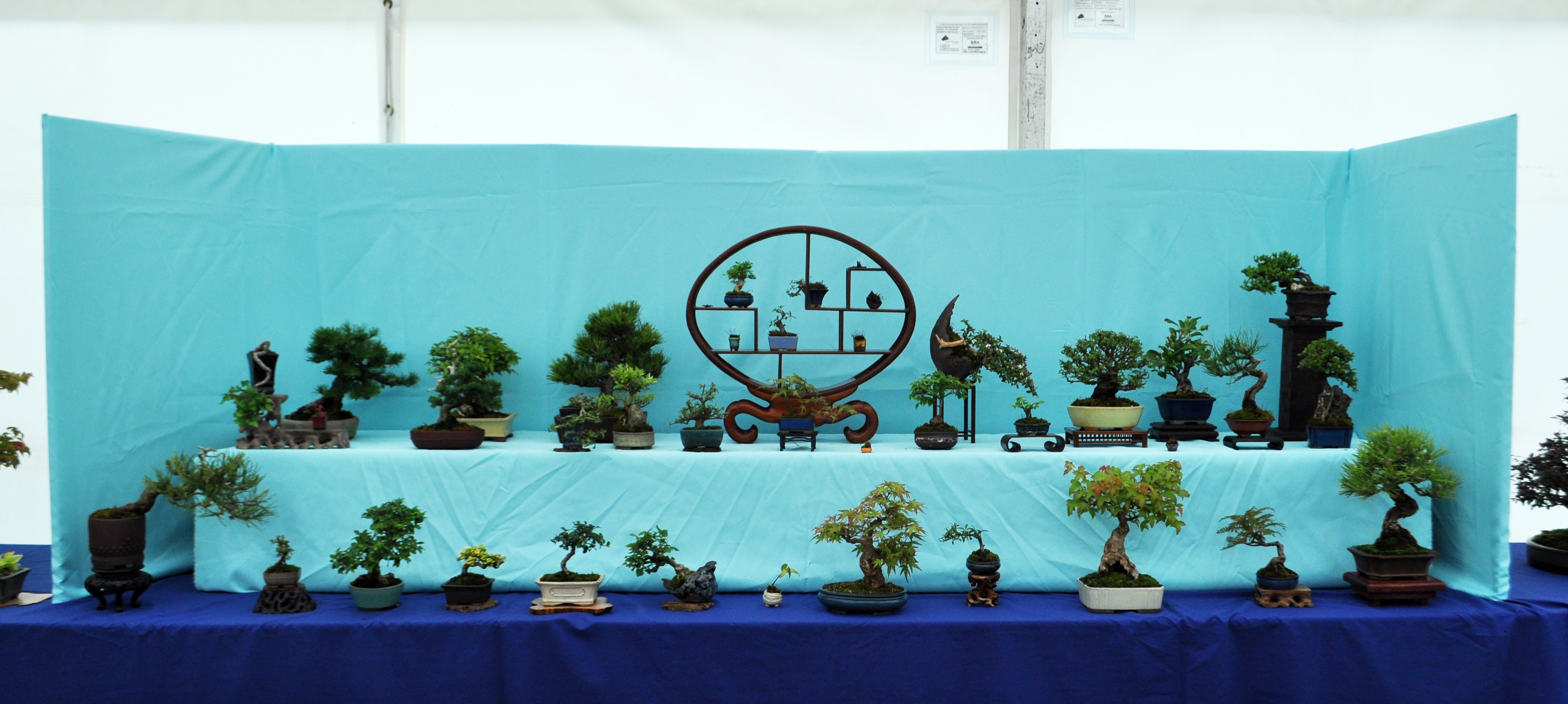 Mame and Shohin display
