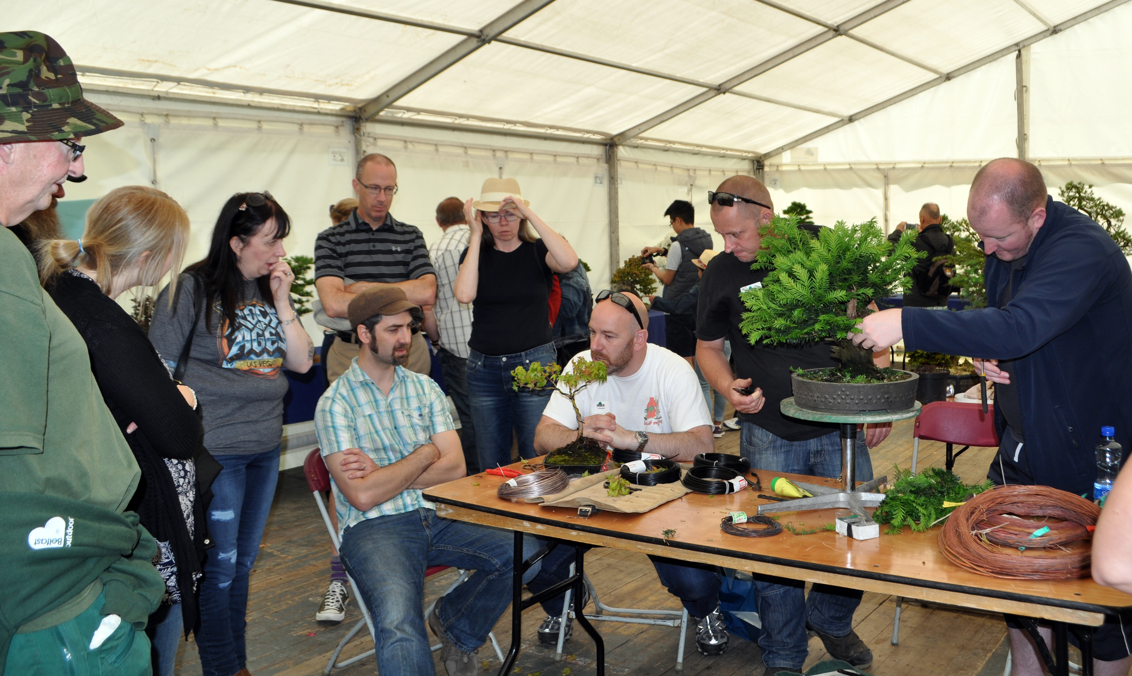 Bonsai clinic in action