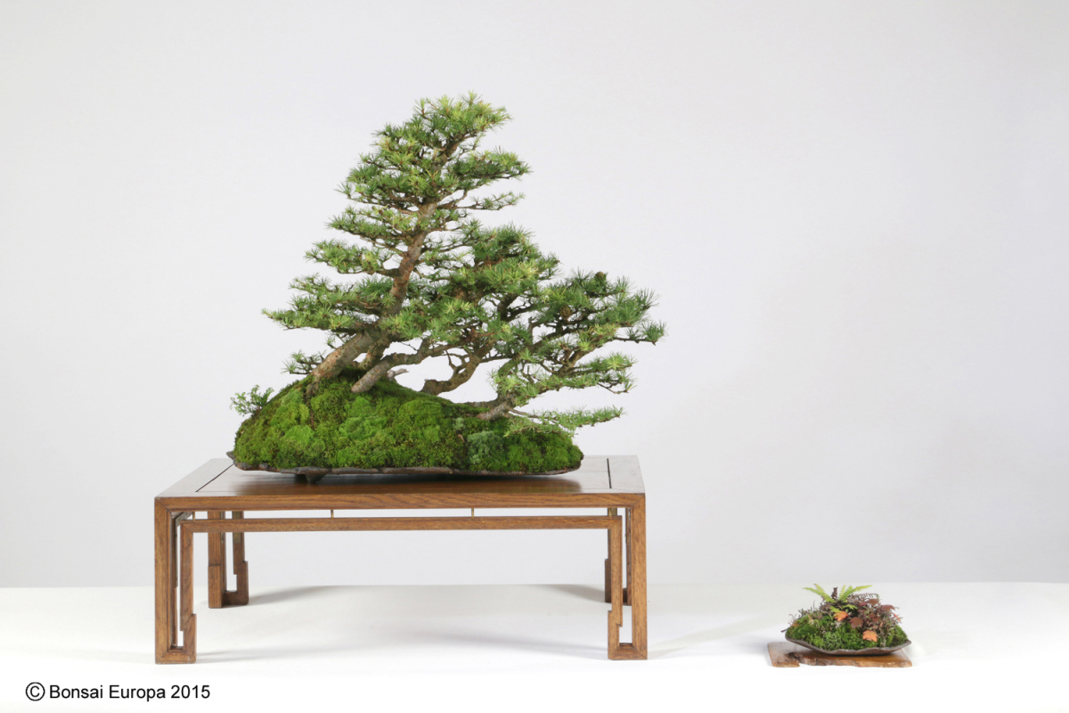 bonsai-tree-33