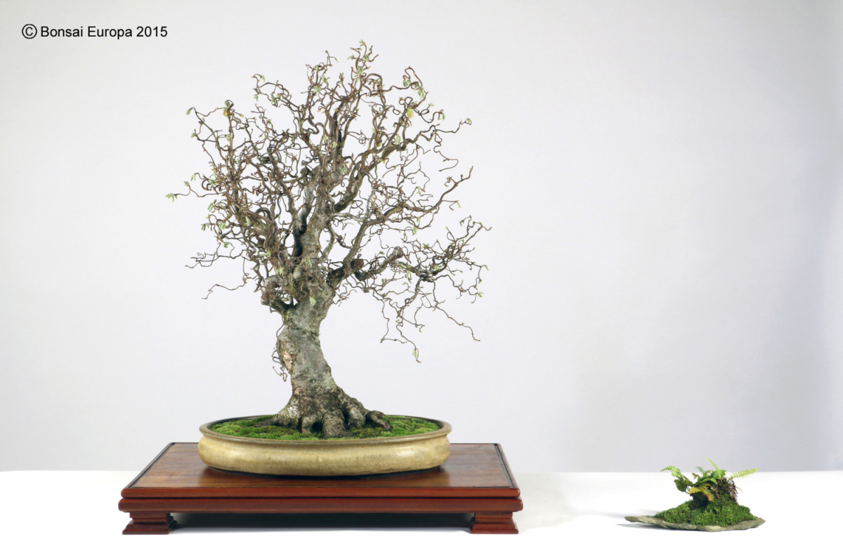 bonsai-tree-58